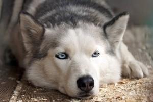Собаки чаще кусают тревожных людей