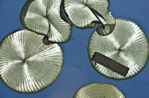 ЦАХАЛ проведет самые крупные парашютные учения в середине года