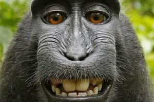 Не все улыбки солнечные – некоторые виды могут вызвать стресс