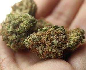 ВАДА пересмотрит свое отношение к марихуане